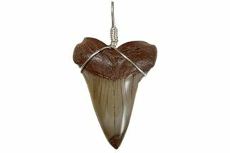 "1.9"" Wire Wrapped, Fossil Mako Tooth Necklace  For Sale, #173879"