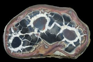 "3.3"" Cut/Polished Septarian Nodule Half - Morocco For Sale, #174449"