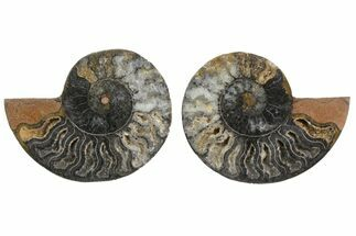 "Buy 3.2"" Cut/Polished Ammonite Fossil (Pair) - Unusual Black Color - #165661"