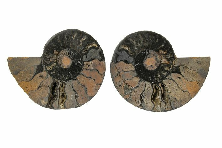 "Bargain, 3.1"" Cut/Polished Ammonite Fossil (Pair) - Black Color"