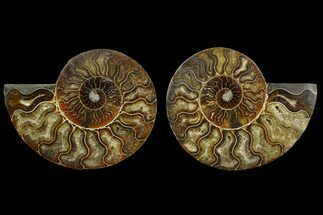"Buy 5.5"" Agate Replaced Ammonite Fossil (Pair) - Madagascar - #169012"
