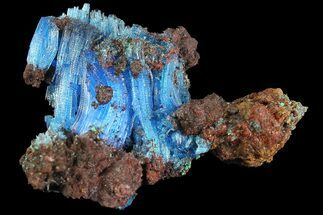 "1.5"" Vibrant Blue Chalcanthite with Malachite - Planet Mine, Arizona For Sale, #176444"