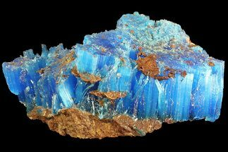 "1.9"" Vibrant Blue Chalcanthite - Planet Mine, Arizona For Sale, #176465"
