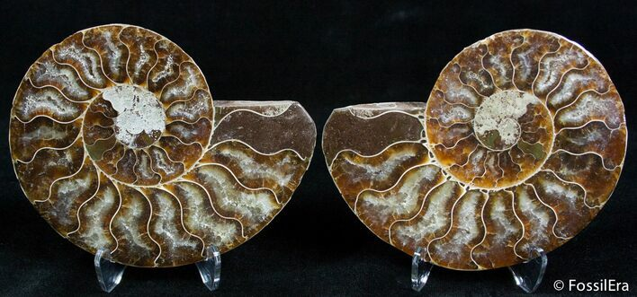 Beautiful 3 1/2 Inch Split Ammonite Pair