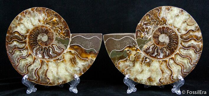 5.75 Inch Split Ammonite Pair