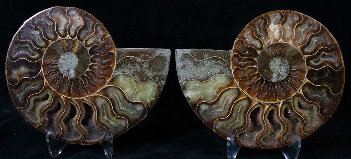 "5.05"" Cut/Polished Ammonite Pair - Agatized"