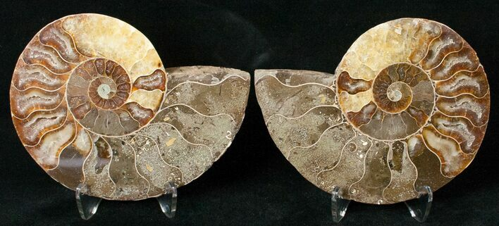 "3.60"" Polished Ammonite Pair - 110 Million Years"