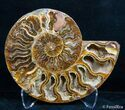 4.45 Inch Split Ammonite Pair - #2628-4