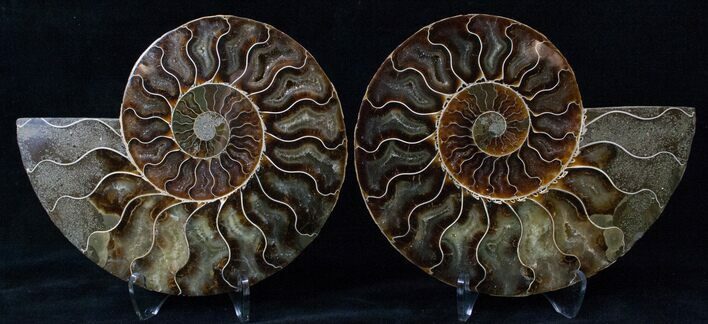 "5.7"" Cut/Polished Ammonite Pair - Agatized"