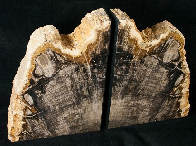 "8.4"" Oregon Petrified Wood Bookends - Oak"