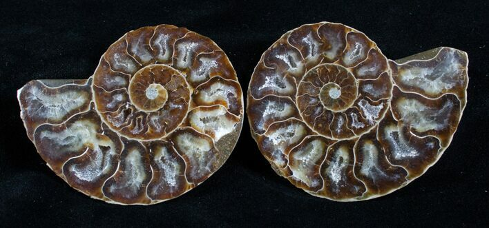2 1/2 Inch Polished Ammonite (Pair) - Crystal Chambers