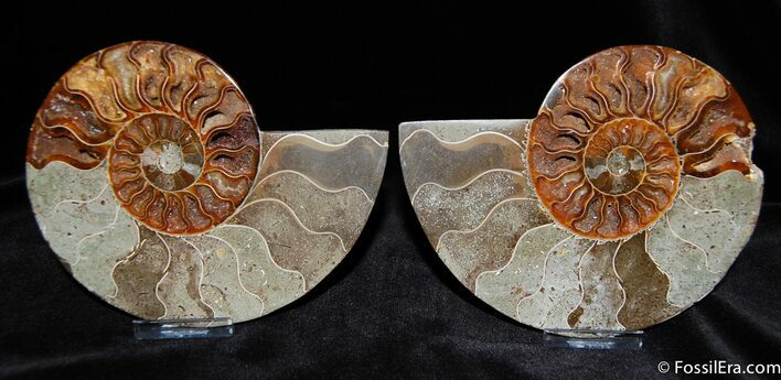 5.5 Inch Polished Ammonite With Crystal Pockets
