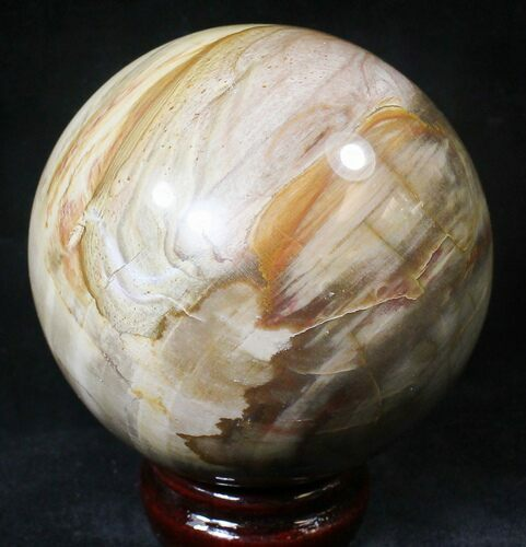 "3.3"" Colorful Petrified Wood Sphere"