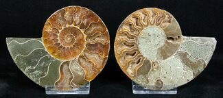 3 1/2 Inch Polished Ammonite - Crystal Pockets For Sale, #3311