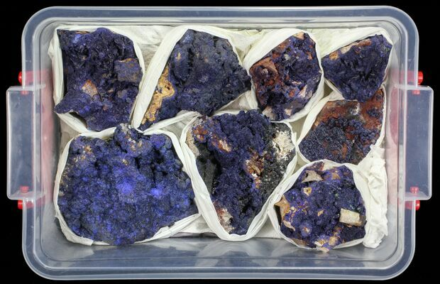 Vibrant Azurite From Morocco Wholesale Lot - 8 Specimens